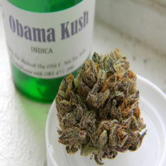 Buy Obama kush online, Order Obama kush, Obama kush for sale without Script,Best Online Dispensary, Obama kush Mail order, Legit Obama kush Online,24/7 Girl Obama kush Delivery, Obama kush overnight Shipping, 100% money back guaranteeor reship, Buy Marijuana online, Obama kush for sale in USA, Buy Obama kush in USA,Obama kush for sale in Canada without Script, Obama kush Worldwide Delivery, Buy CheapObama kush